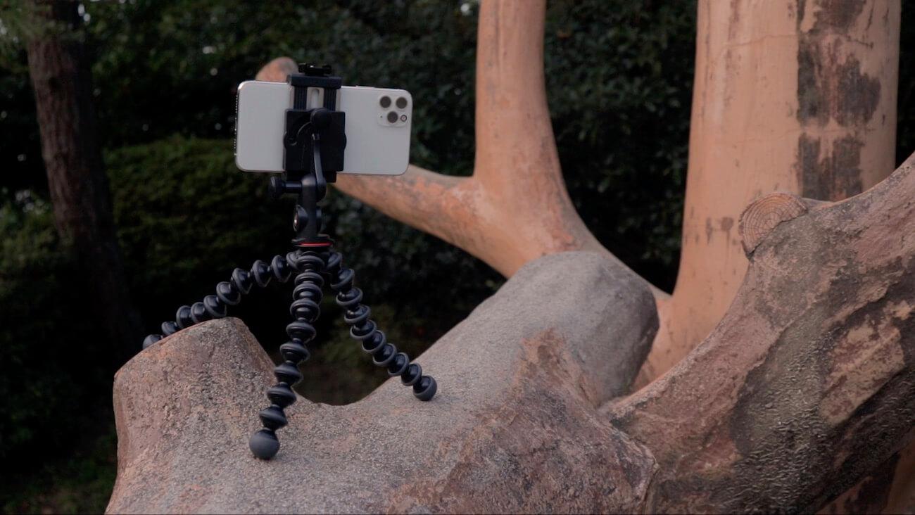 木の上にあるJOBYのゴリラポッド